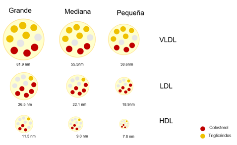 LDL, VLDL and HDL